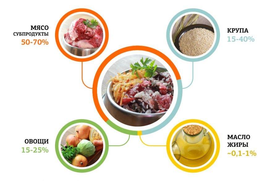 Чем кормить собаку? сколько раз в день давать еду? правила кормления натуральной пищей в домашних условиях. что нельзя давать?