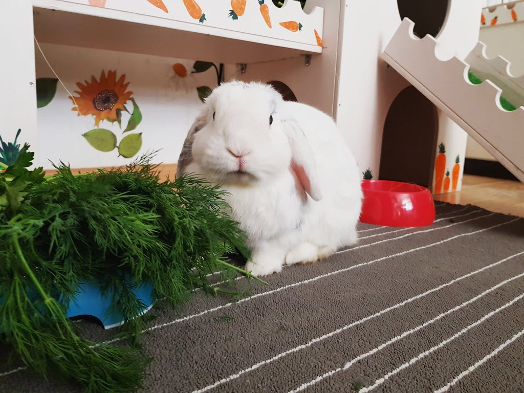 Все о декоративных кроликах: породы, поведение, отличия домашних животных от обычных