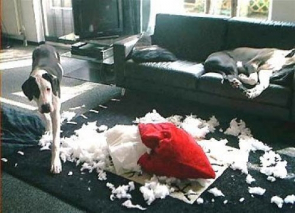 Как отучить собаку лаять дома, в отсутствии хозяина и когда она остается одна дома