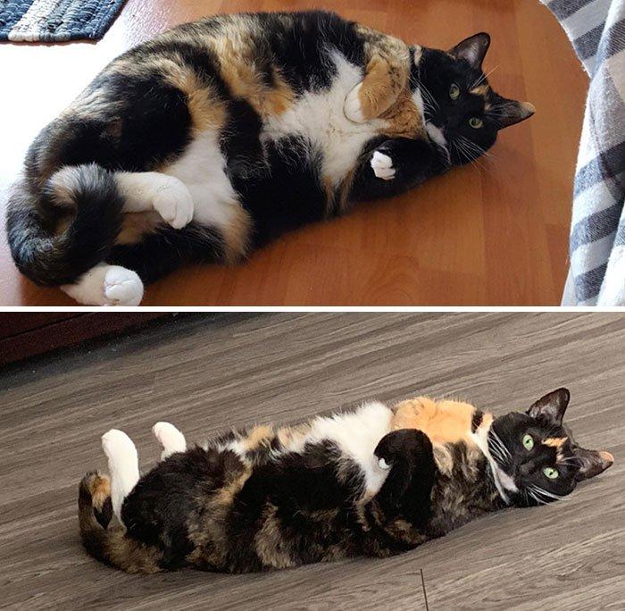 Как помочь кошке похудеть: рекомендации по составлению рациона, расчету порции, выбору корма и расписания упражнений, полезные советы владельцам