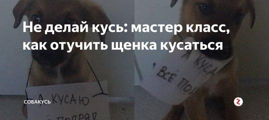 Что делать, если ваш щенок кусает руки и ноги. как отучить щенка кусаться