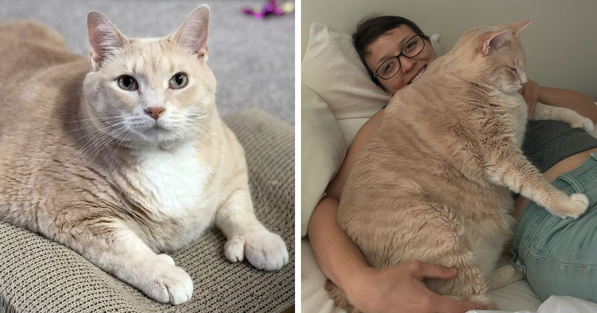 Как заставить кота есть лечебный корм