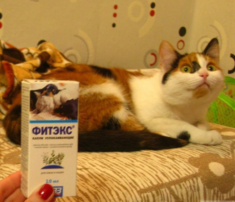 Фитэкс для кошек: отзывы, инструкция по применению, противопоказания