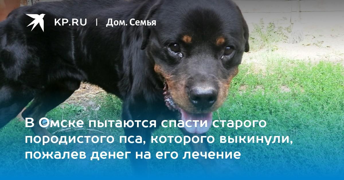 Собаки для уличного содержания: список пород. какую температуру выдерживают собаки зимой на улице?