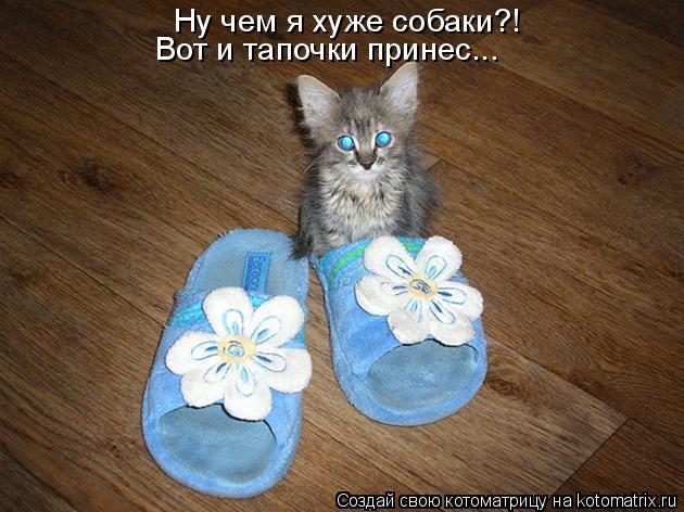 Как научить собаку приносить тапочки - dogtricks.ru