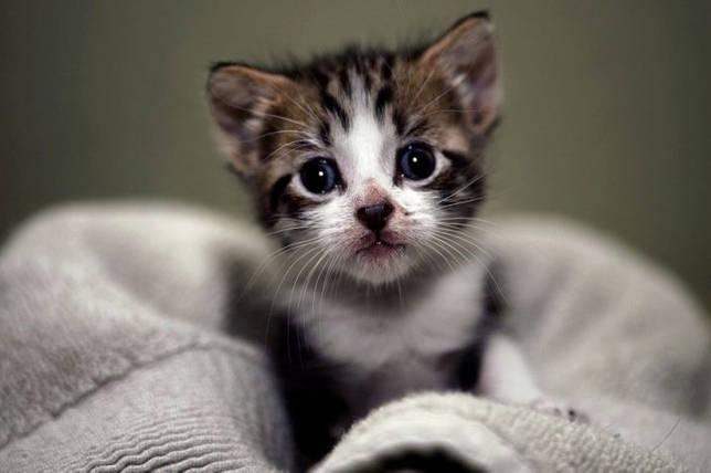Когда котята начинают видеть после открытия глаз