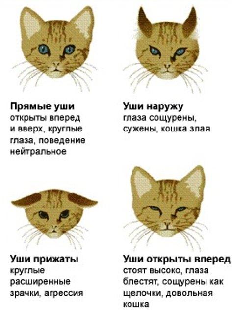 Причины из-за чего у кота холодный мокрый нос