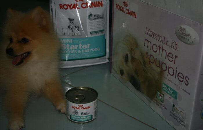 Чем кормить шпица померанского: отзывы владельцев о питании питомца и какой выбрать лучший корм для щенка в 2 и 3 месяца