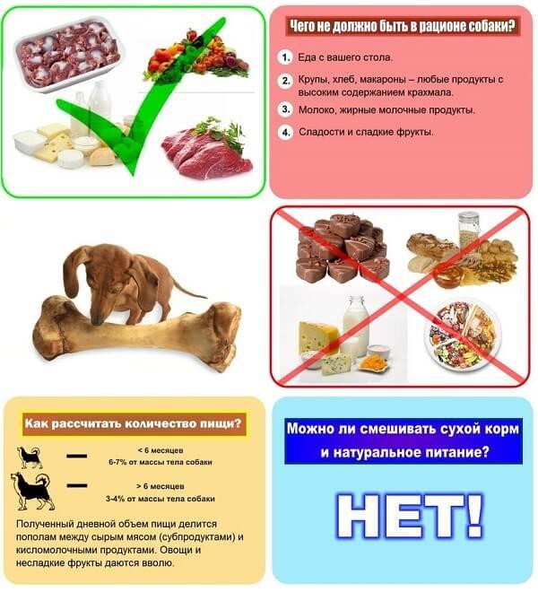 Мясо для собак и щенков: какое можно давать, советы ветеринаров