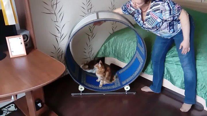 Описание и правила изготовления бегового колеса для кошек. беговые колеса для кошек: выбор и приучениевсе о породах кошек с описанием, фотографиями и названиями.