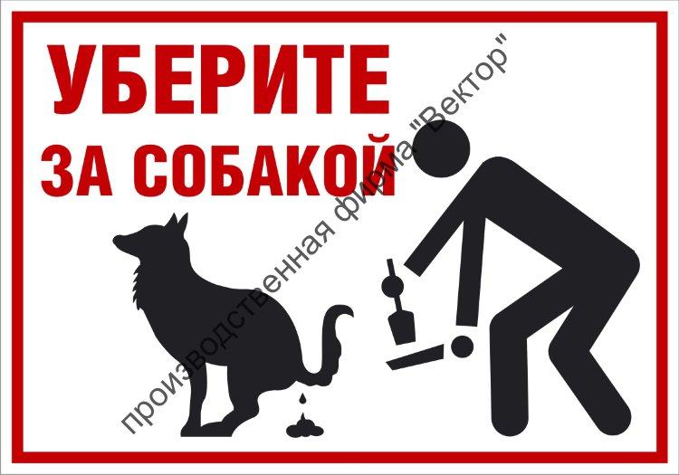 Как отучить кота гадить в неположенном месте: способы борьбы и методы наказания