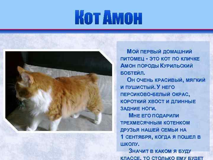Курильский бобтейл — кошка с характером собаки, характер, описание, уход