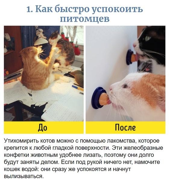 Как вымыть кошку быстро и аккуратно, чтобы вас не покусали