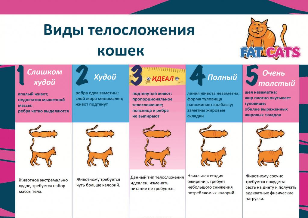 Как собаке сбросить вес
