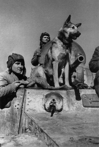 Собака Путина: как зовут и какая порода