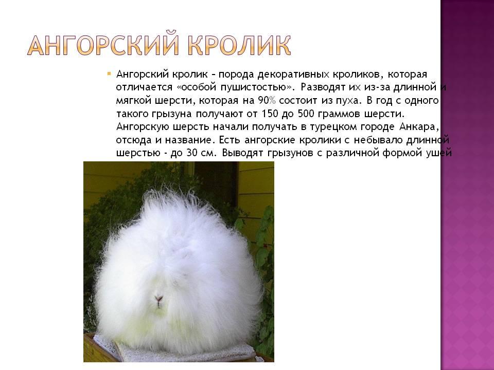 Все о декоративных кроликах — содержание в домашних условиях и уход