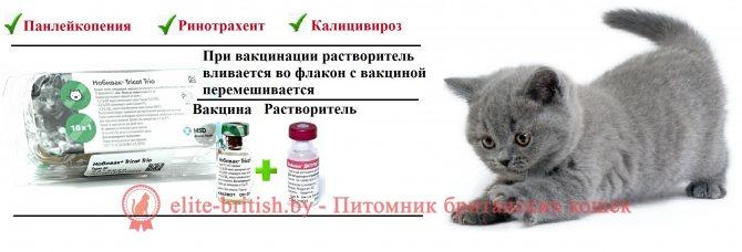 Глисты у беременной кошки: группы паразитов, диагностика и лечение