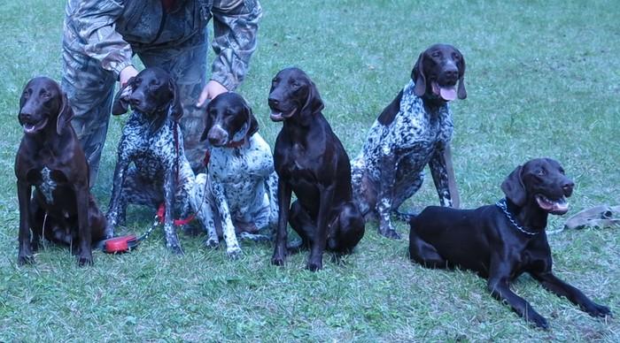 14 лучших пород собак для различных видов охоты