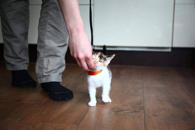 ᐉ как сделать ловушка для кошек схема. ловим кота при помощи ловушек из подручных материалов. лучшая приманка для кошки