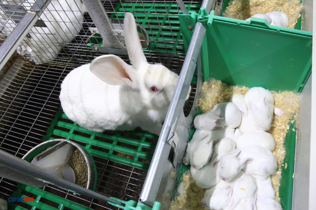 Мини-ферма для кроликов: какие бывают,как построить своими руками