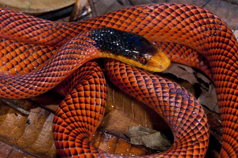 Виды змей. описание, особенности, названия и фото видов змей   живность.ру