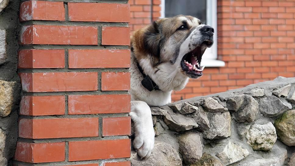 Лучшие породы собак для охраны частного дома на улице