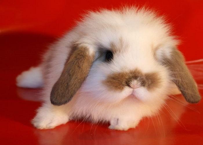 Какое имя можно дать декоративному кролику: лучшие имена мальчику и девочке