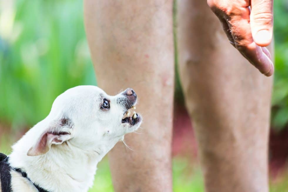 Как отучить собаку кусать руку: почему они кусаются, как реагировать, советы специалистов