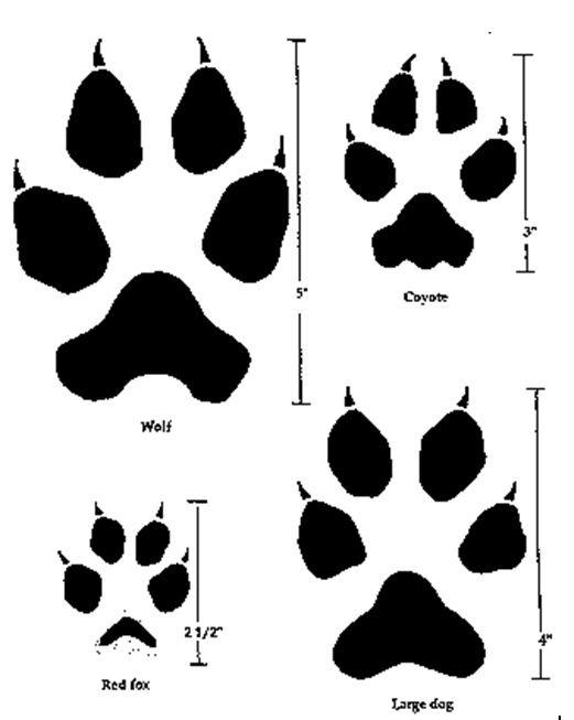 Следы животных с подписями