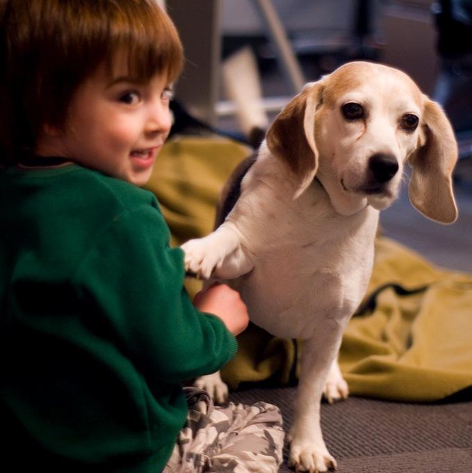 Собаки для квартиры и детей: лучшие породы, как выбрать