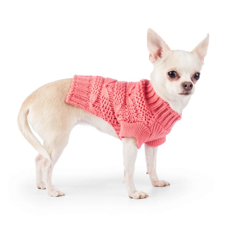 Чихуахуа: уход и содержание собаки в домашних условиях и в квартире, а также как ухаживать, содержать и чем кормить щенка