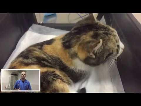 Сколько коты отходят от наркоза после кастрации: как долго могут спать