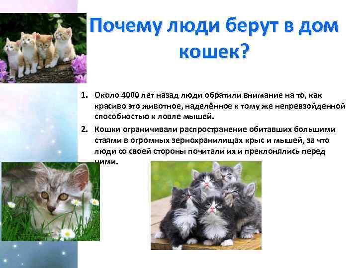 ᐉ как купить породистого котенка? - ➡ motildazoo.ru