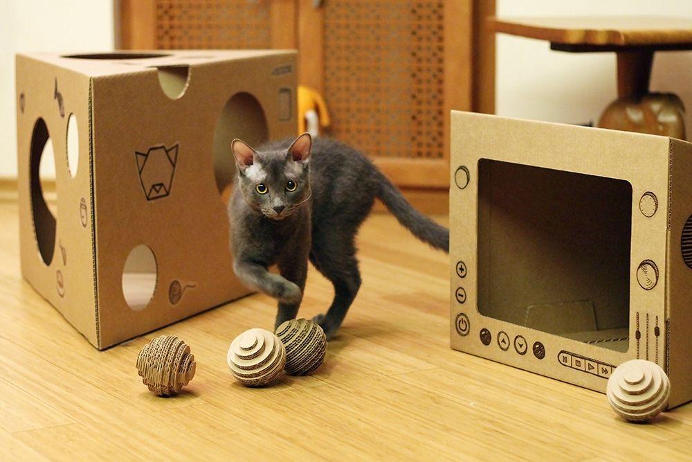 Почему кошки облизывают полиэтиленовые пакеты, и есть ли в этом вред?
