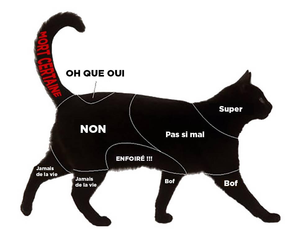 Инструкция: как гладить кошку, чтобы ей понравилось - статьи