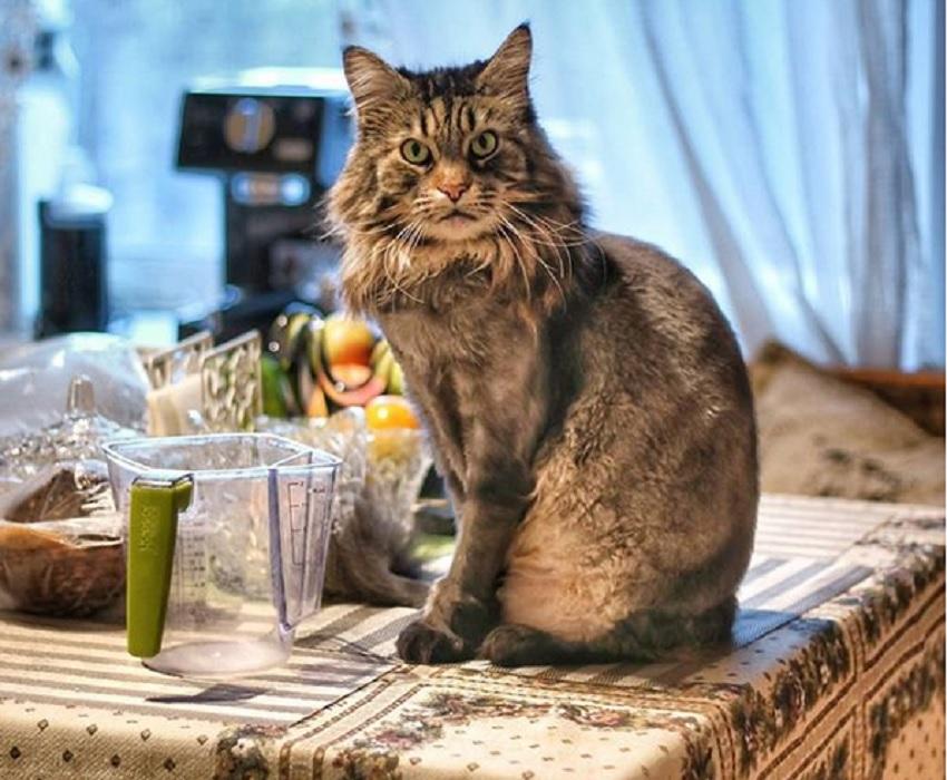 Как отучить кошку лазить по столам: эффективные приемы, причины непослушного поведения котов и меры против них