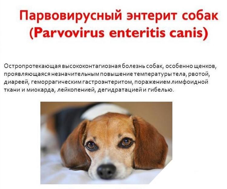 Понос (диарея) у собак