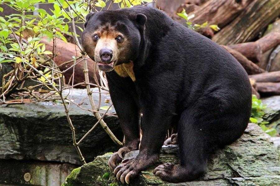 Медведь – косолапый сладкоежка