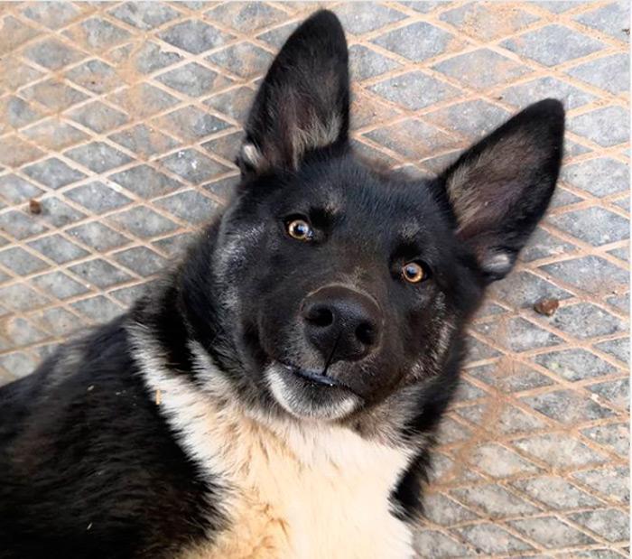 Узнай породу собак по картинке