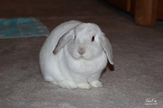 Как назвать кролика девочку и мальчика: клички для питомцев
