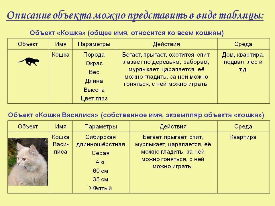 Как определить возраст котенка: по внешнему виду, телосложению, весу, зубам и поведению