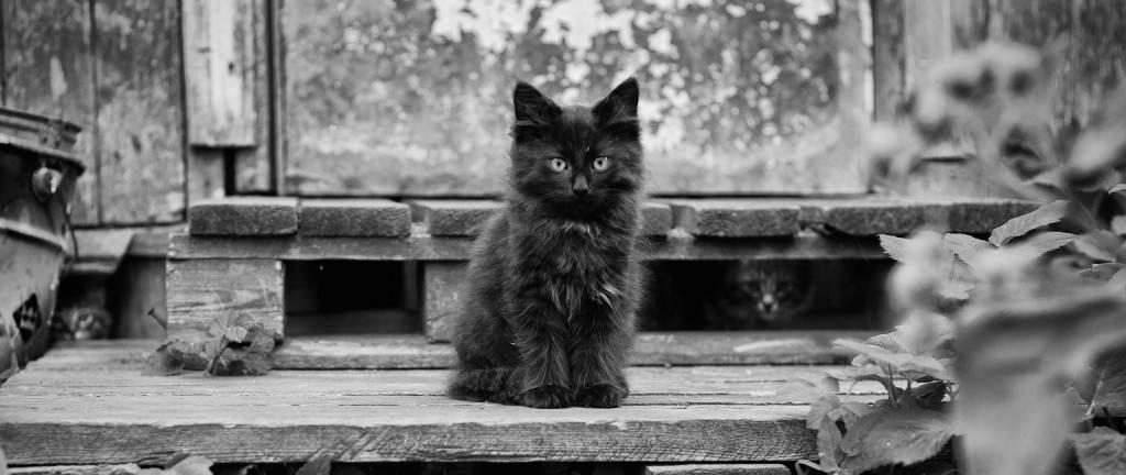 Приметы про кошек и котят. примета про черную, белую, серую, трехцветную кошку, до замужества. кошка пришла в дом — примета