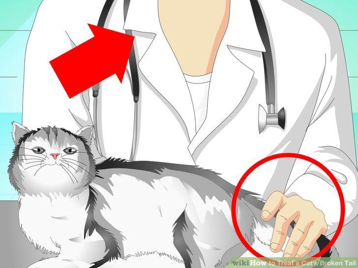 Перелом хвоста у кошки
