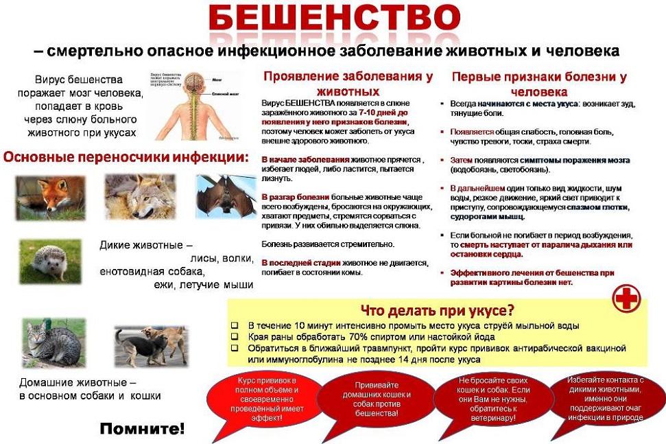Что такое бешенство и почему опасны укусы или царапины домашних собак и кошек? -  национальный центр хирургии