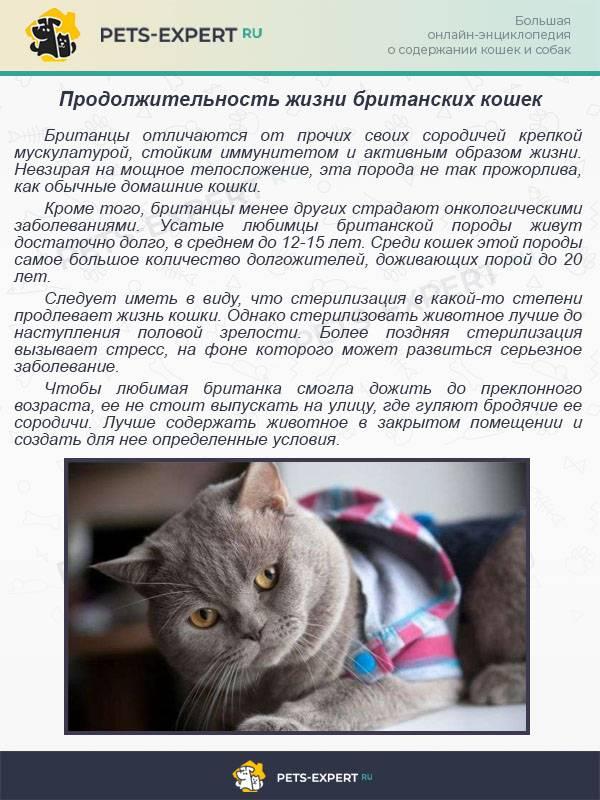 Топ 10 короткошерстных пород кошек - названия, описание и фото