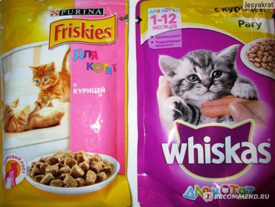 Корм фрискис для кошек и котят: рекомендации по кормлению и отзывы