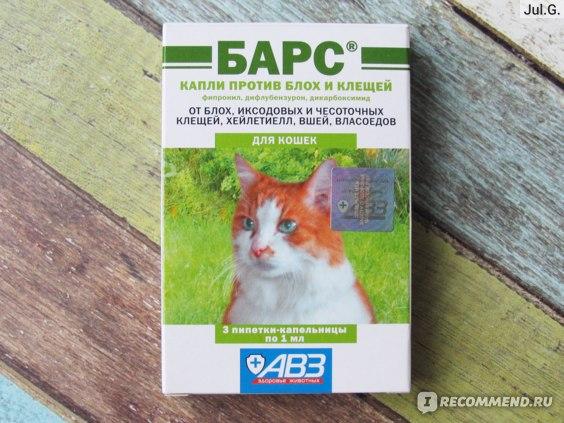 Как избавиться от кошачьих блох в квартире и частном доме – 14 советов