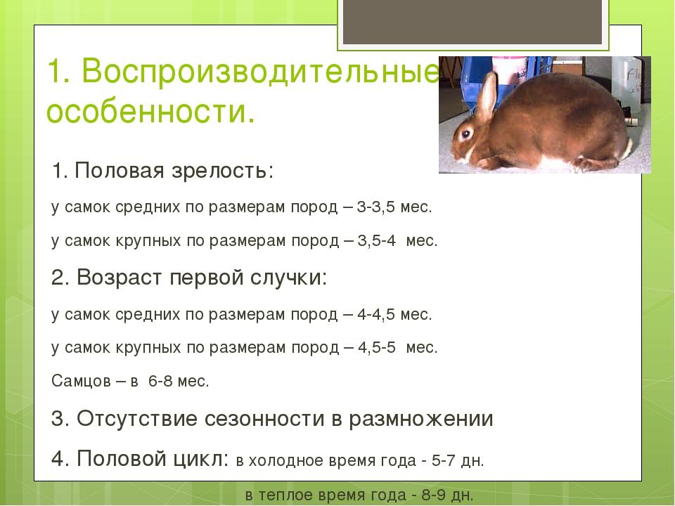 Как долго кошки находятся в течке? все, что вам нужно знать!