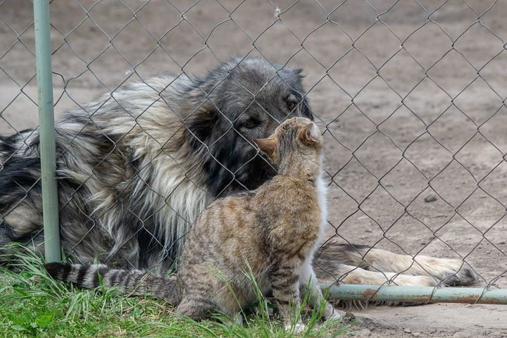 Как подружить кота и котенка: способы примирения питомцев