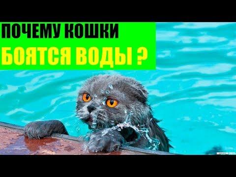 Почему кошки боятся воды - 90 фото и видео как приучить кота к купанию